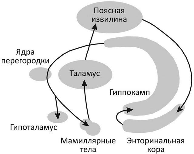 Программа дизартрия net скачать